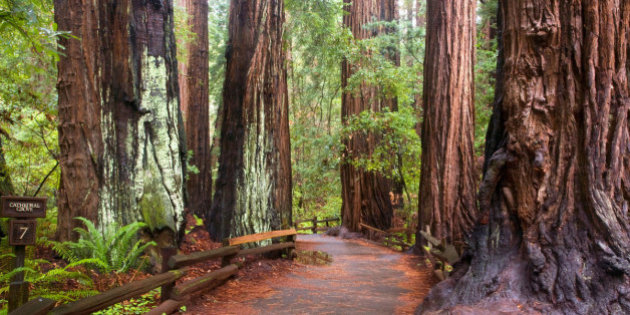 cathedral-grove-3